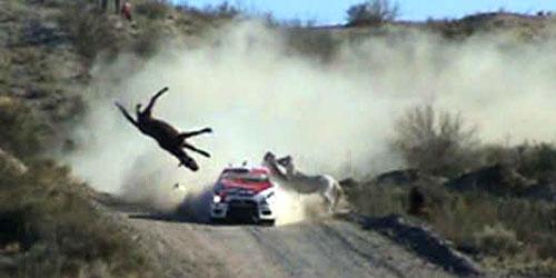 La imagen del impacto del auto de Villagra con el caballo. Foto: Cadena 3